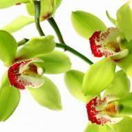 Snijbloemen & kamerplanten